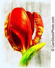 тюльпан, попугай