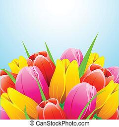 тюльпан, цветок, красочный
