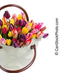 тюльпан, цветы, мешок