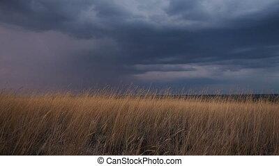 тяжелый, золотой, дождливый, трава, clouds, быть, синий, это, дождь, скоро, темно, sunset., собирается, horizon., ветер, darker, swaying, ears