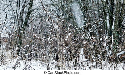 тяжелый, лес, снегопад, зима