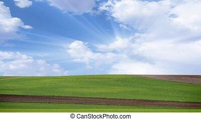 урожай, поле, окружающая среда, концепция