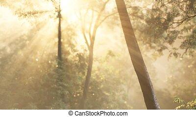 утро, лес, рано, туманный