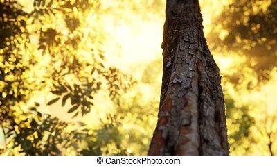 утро, рано, туманный, лес