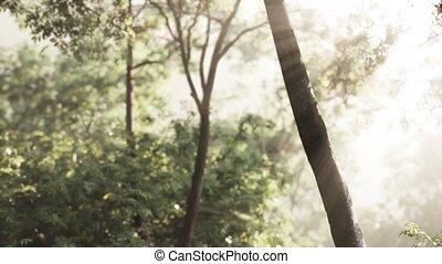 утро, туманный, лес, рано