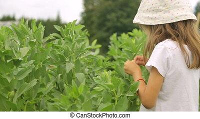 фасоль, принимать пищу, сад, девушка, немного