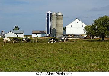 ферма, крупный рогатый скот