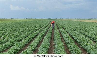 фермер, соя, растение, поле