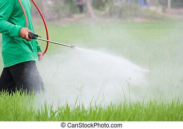 фермер, spraying, пестицид, в, , рис, поле
