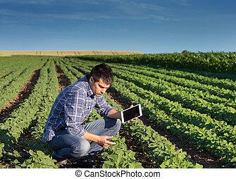 фермер, with, таблетка, в, соя, поле