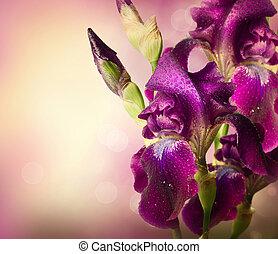 фиолетовый, цветы, изобразительное искусство, ирис, цветок, design., красивая