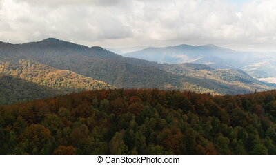 флора, красивая, лес, shining, выше, летающий, красочный,...