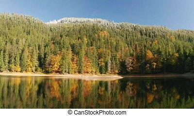 флора, красивая, лес, shining, выше, летающий, красочный, ...