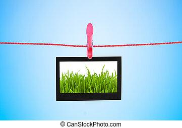 фото, трава