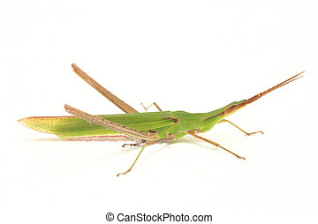 фото, grasshopper.