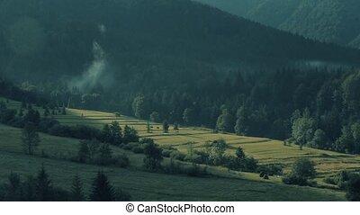хвойный, зеленый, словакия, лес, луг