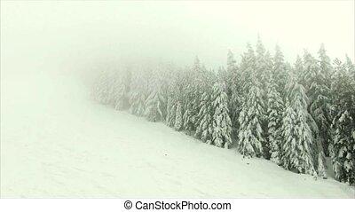 хвойный, лес, mountains