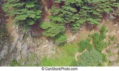 хвойный, приморский, лес, пейзаж