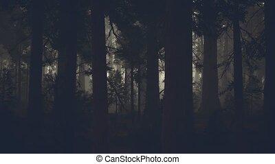 хобот, лес, дерево, черный, темно, сосна