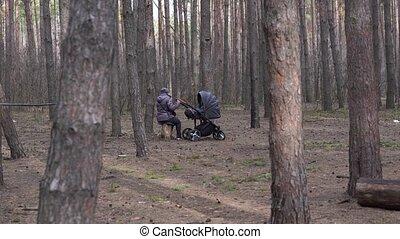 ходить, forest., отдыха, ее, бродяга, пожилой, woodland., ...