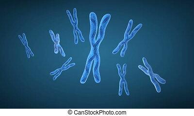 хромосома, икс, and, dna, strands