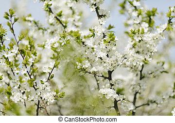 цвести, весна