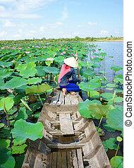 цветок, вьетнамский, лотос, лодка, деревня, пруд, ряд