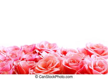 цветок, граница