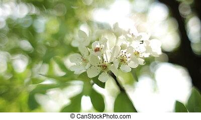 цветок, дерево, деликатный, blossoming