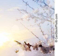 цветок, изобразительное искусство, весна, дерево, blooming, background;, пасха, счастливый