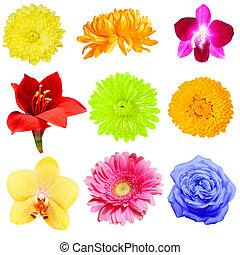 цветок, коллекция