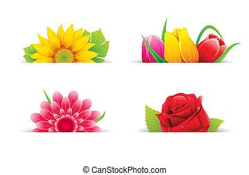 цветок, красочный