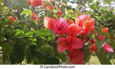 цветок, крупным планом, красный