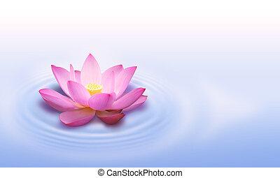 цветок, лотос
