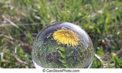 цветок, отражение, одуванчик, цвести, упущение, открытие, кристалл, мяч, время, его