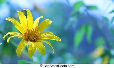 цветок, природа