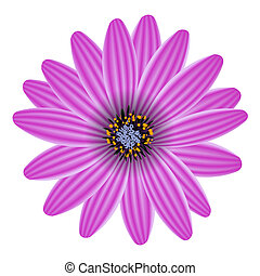 цветок, пурпурный, isolated, иллюстрация, вектор, белый