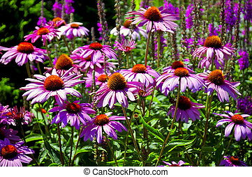 цветок, сад