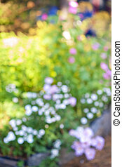 цветок, defocused, сад