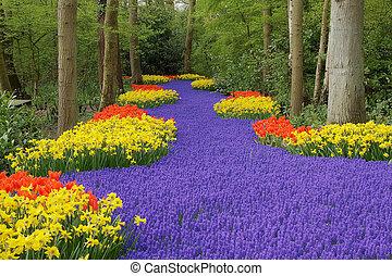 цветок, gardens, постель, keukenhof