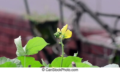 цветок, swinging, ветер