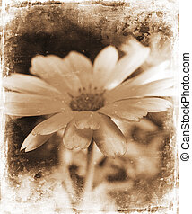 цветочный, гранж
