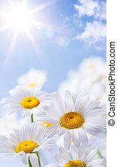 цветочный, лето, задний план