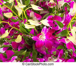 цветочный, тропический, задний план, orchids