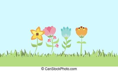 цветы, анимация