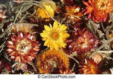 цветы, высушенный