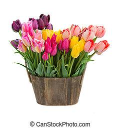 цветы, горшок, деревянный, тюльпан