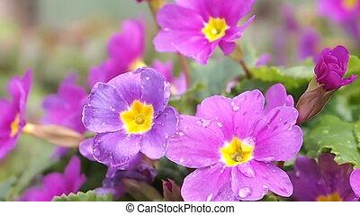 цветы, дождь, после