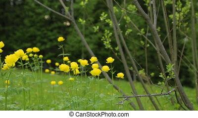 цветы, желтый, лето, поле