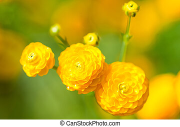 цветы, желтый